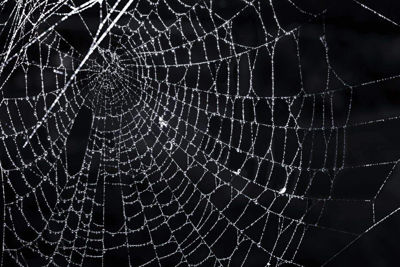 What's Your Answer? The Dark Web Thumbnail