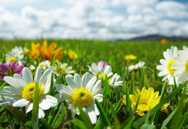 Let a Thousand Flowers Bloom.fm