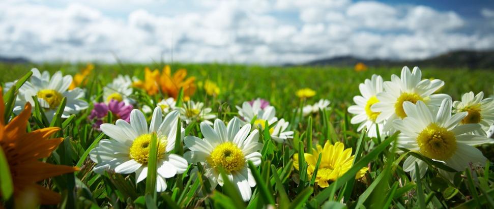 Let a Thousand Flowers Bloom.fm Thumbnail