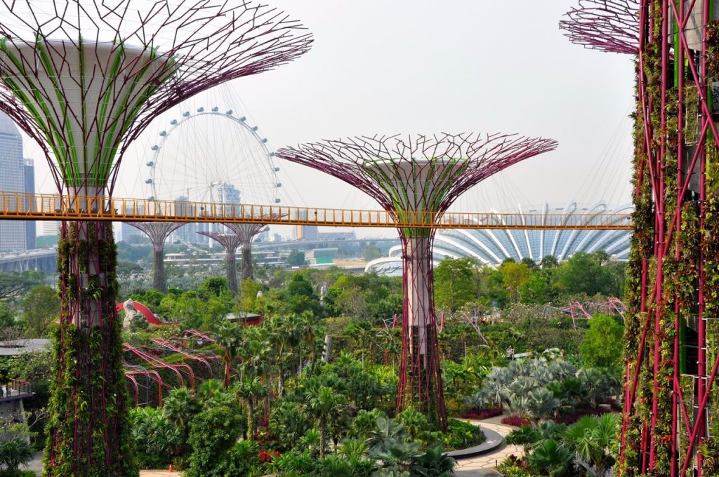 "photo of the ""super trees"" in Singapore"